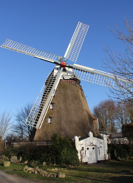 Reetgedeckte Windmühle in Strukum