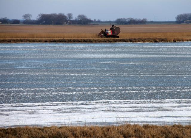 Schlüttsiel, Rietgrass mähen am gefrorenen See